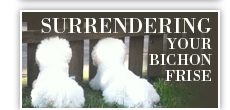 Surrendering your Bichon Frise